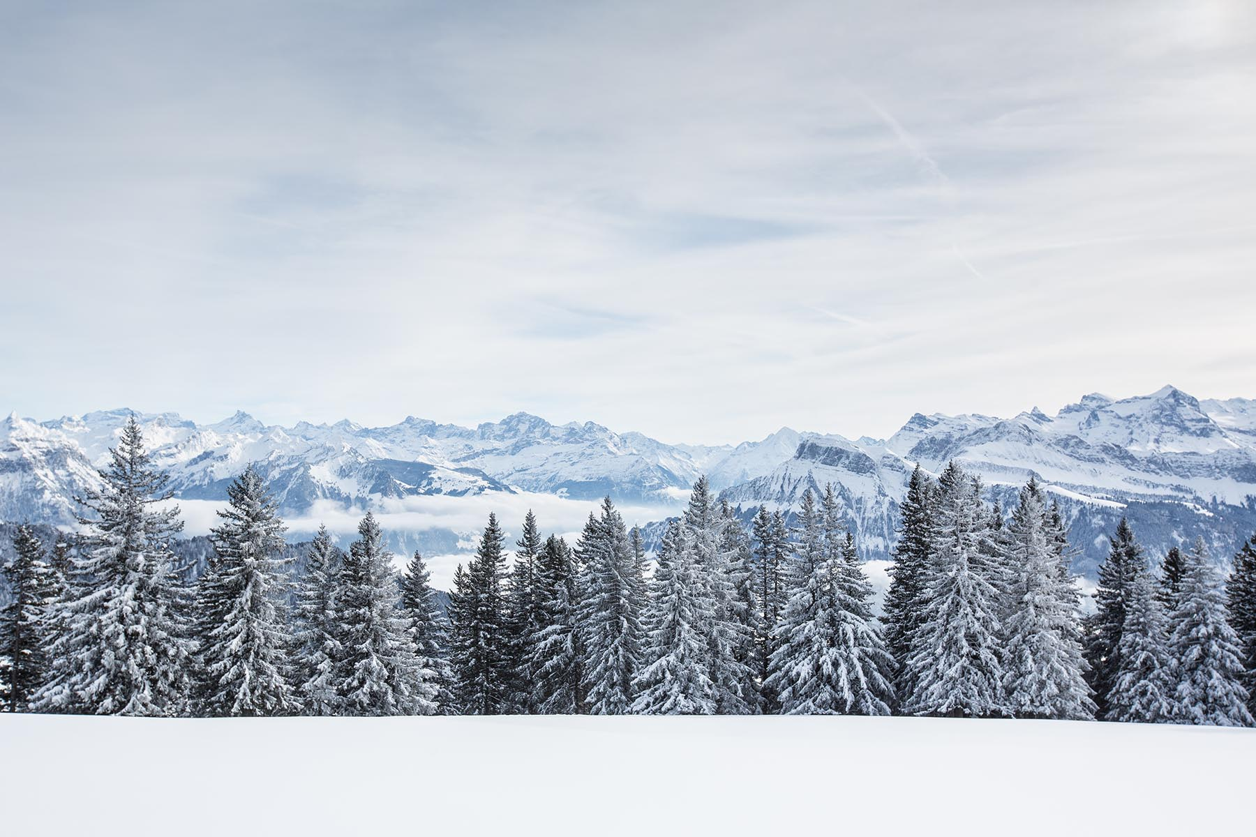 Splendid Winter Alpine Scenery With High Mountains And Trees Cov